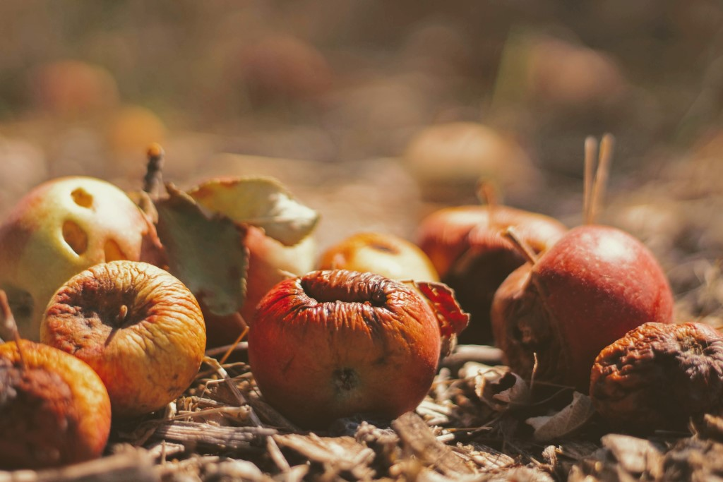 Multiple red apples on the ground